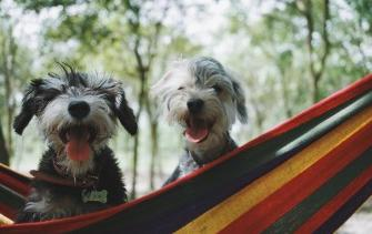 Why take your dog to a camping is the best idea that you could ever have